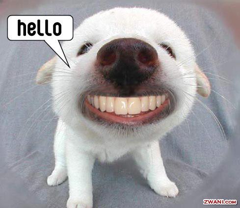 hello_doggy.